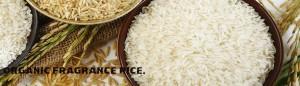Organic brown rice Singapore