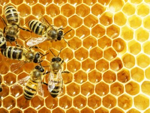 Buy bee propolis and propolis honey from GoPure Online Singapore